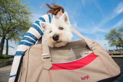 Kurgo Hund Bärare ute och går