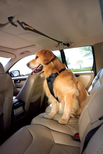 Kurgo Zip Line Bil Hund på tur