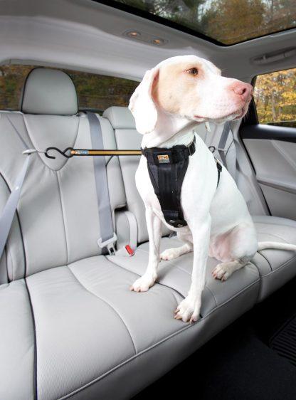 Kurgo Zip Line Bil Hund mitt på spänd
